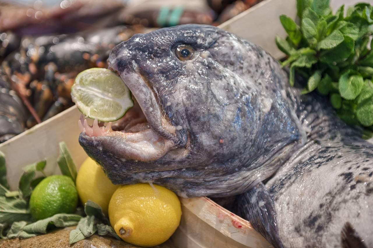 tranquilo-estida-the-seafood-bar-amsterdam-spui-vis-zeewolf